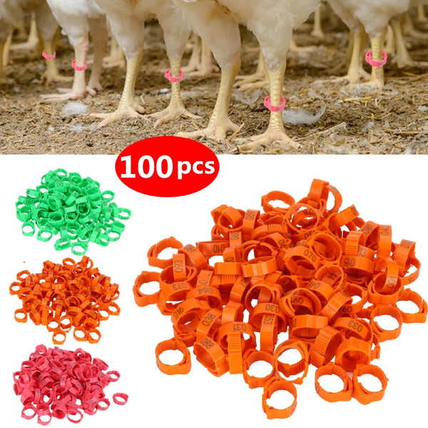chickenclipring, poultrysupplie, Farm, poultryfootring