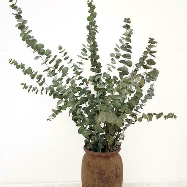 eucalyptu, eucalyptusbranchesbouquet, Natural, Home Decor