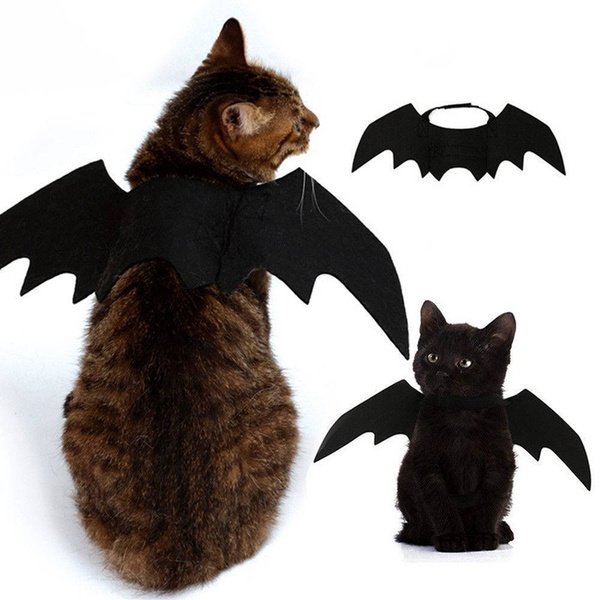 cute, Bat, Cosplay, petcatbatwingscosplay
