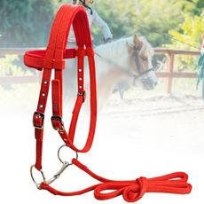 horse, Fashion, Equestrian, Halter