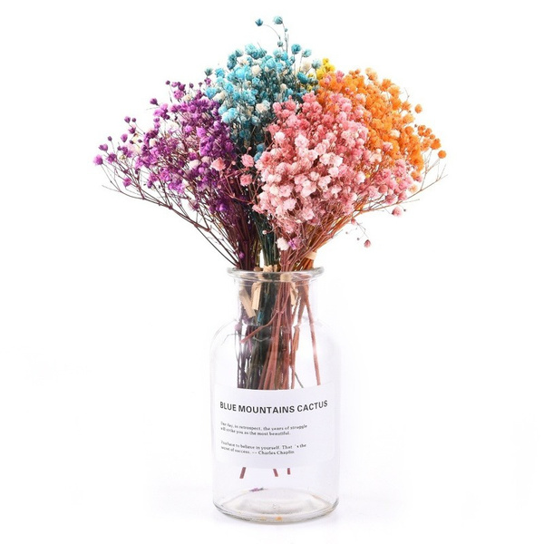 Beautiful, gypsophila, Flowers, Natural