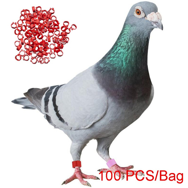 carrierpigeon, pigeonring, poultryfootring, footring