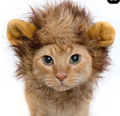 Head, Pets, Dress, Cats