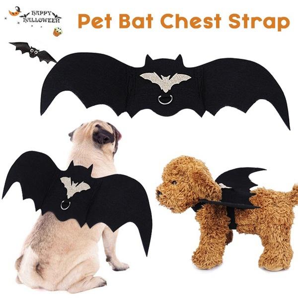 cute, Vest, Cat costume, Pets