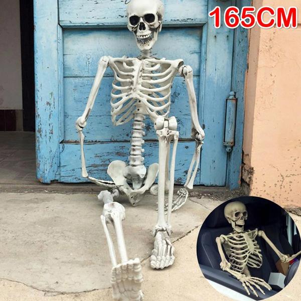 skeletonmodel, Skeleton, halloweenpartyprop, humanskeleton