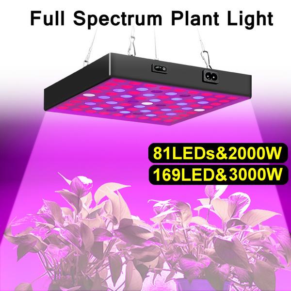Plants, Flowers, led, Garden