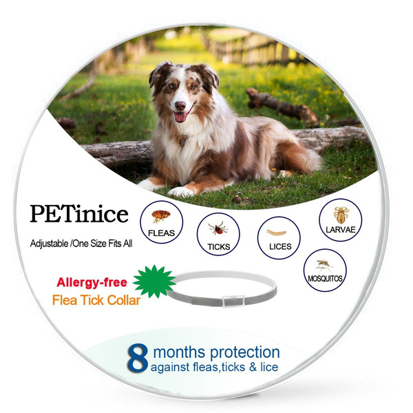Outdoor, Dog Collar, deworming, petsupply