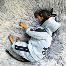 Fashion, Cosplay, Clothes, pet outfits
