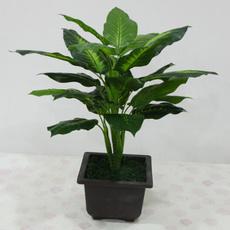 evergreen, driedartificialflower, Decor, Flowers