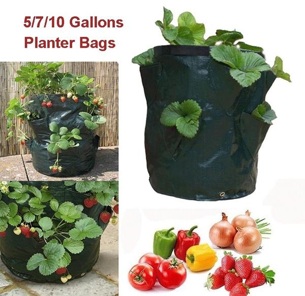 planting, seedsgrowbox, plantbag, Garden
