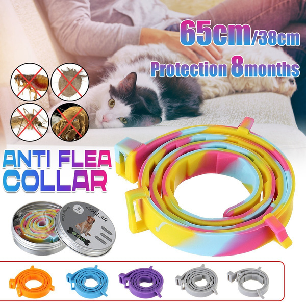 antilicepetcollar, dogspreventingflearing, Pets, Teddy