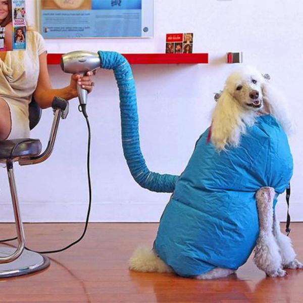 doghairdryer, Pets, pethairblower, petbath