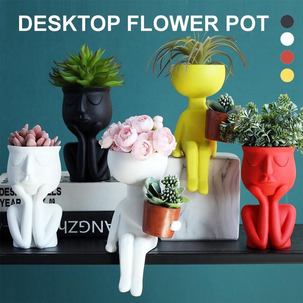succulent, Plants, Flowers, Container