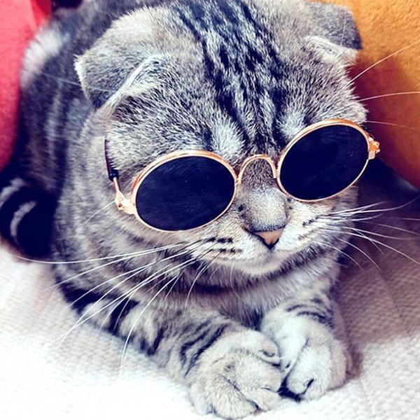 Fashion, eye, Sunglasses, cataccessorie