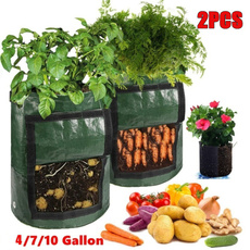 Plants, Flowers, Garden, potatobag