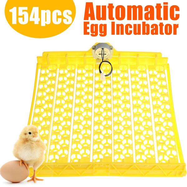 incubatortray, Kitchen & Dining, quailincubator, petaccessorie