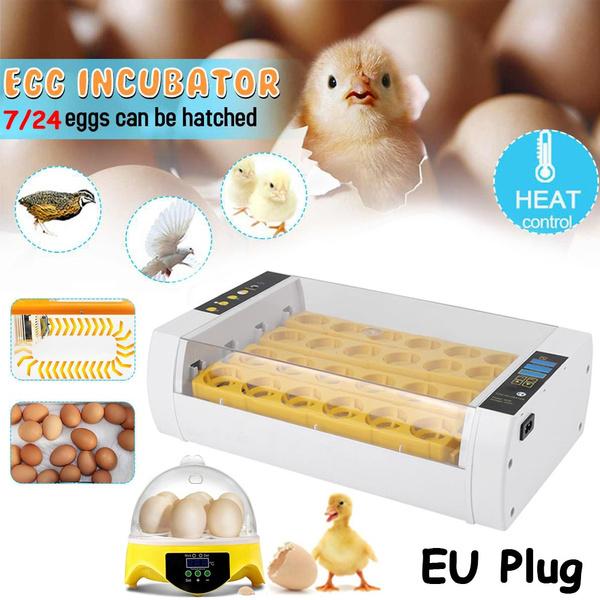 incubator, Capacity, Mini, Home & Living
