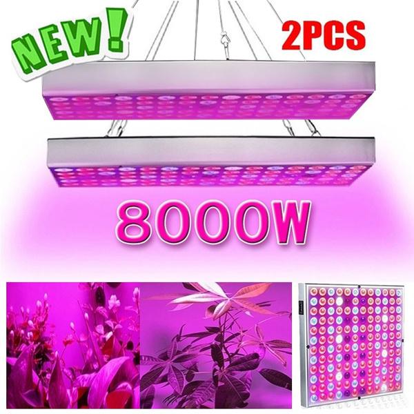 indoorlight, Plants, plantlightindoor, Garden