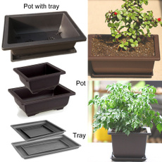 Bonsai, tray, Decor, Flowers
