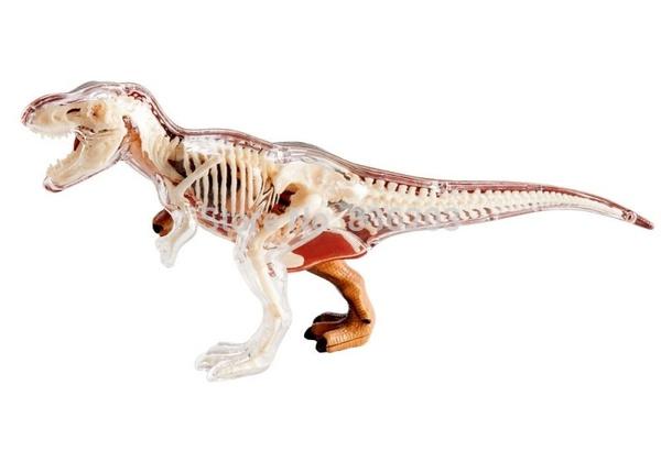 skeletonmodel, skeletonmodelling, 4dmasterstoy, humanskeletonmodel
