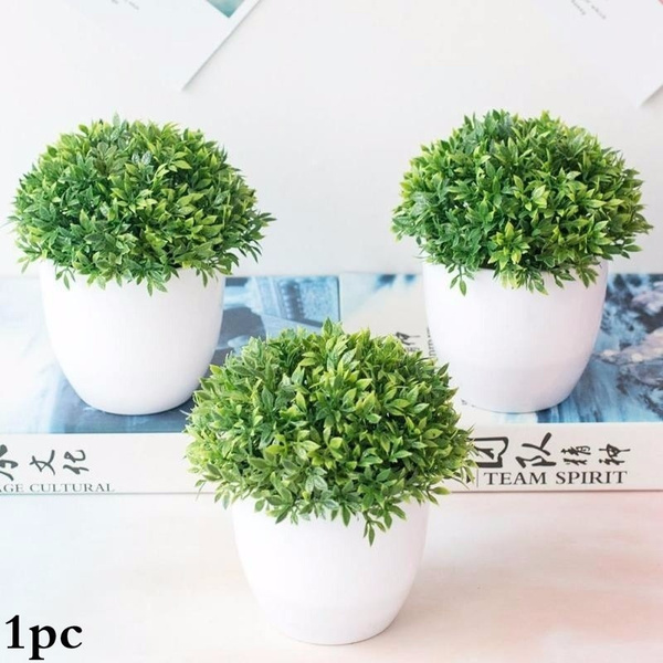 Bonsai, grassball, Plants, Flowers