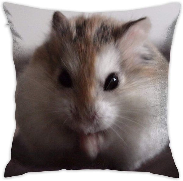 case, hamster, Home Decor, Cover