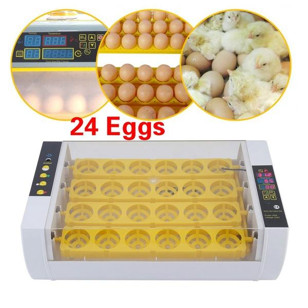 eggtray, digitaleggincubator, chickenincubator, Machine