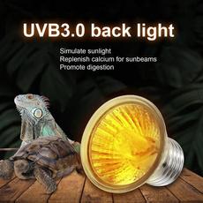 tortoise, Pets, lights, Interior Design