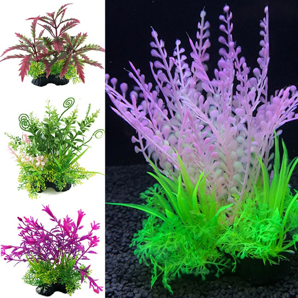 Plants, fishaquarium, Home Decor, lherbedesaquarium