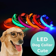 led, Pets, Dogs, Dark