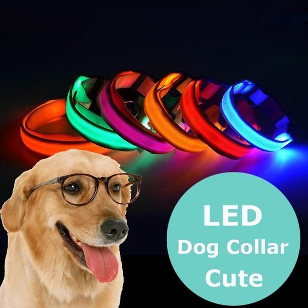 Dog Collar, Pets, lightupcollar, Dogs