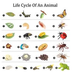 butterfly, insetgrowthmodel, lifecirclemodel, teachingtool