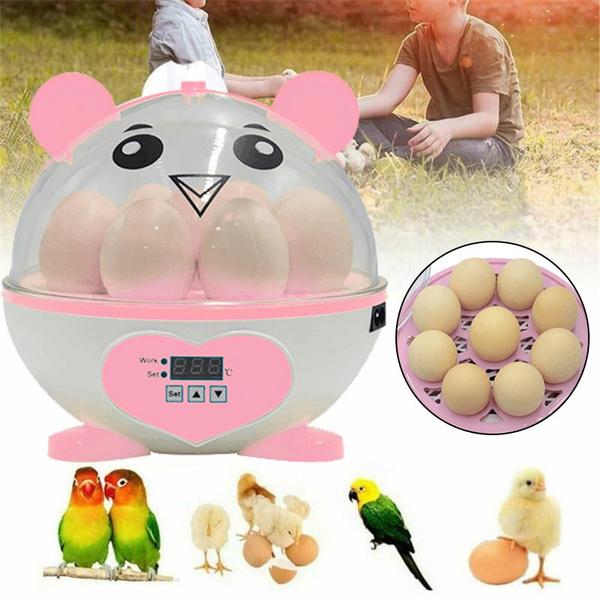 poultry, Mini, minieggincubator, incubator
