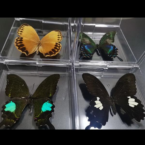 butterfly, Real, Decor, art