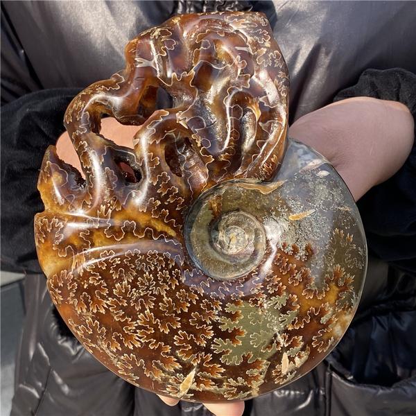 ammonite, Fossils & Minerals, quartz, quartzcrystal