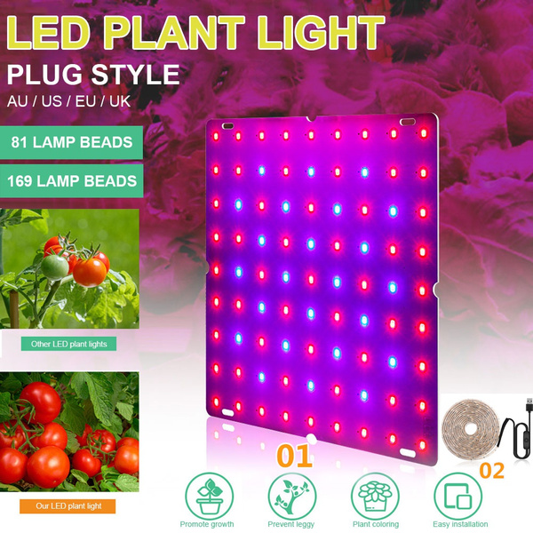 Plants, Flowers, plantsflowerslight, indooroutdoorplantslight