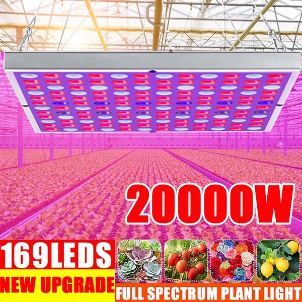 Plants, Flowers, led, lights