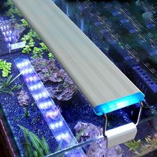 Blues, Plants, led, cm