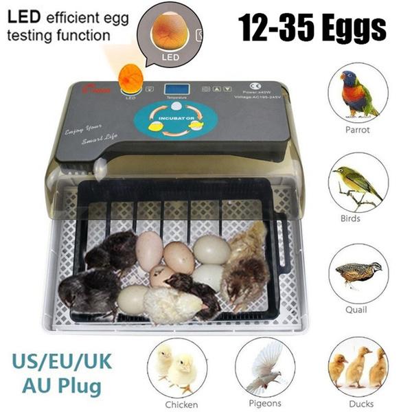 automaticincubator, Farm, poultryhatching, egghatcher