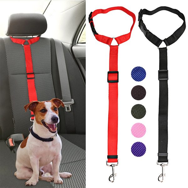 Fashion Accessory, puppy, seatbelt, Pets