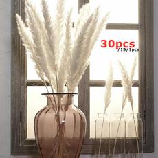 phragmite, Home & Kitchen, Decor, Flowers