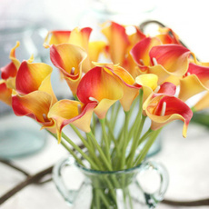 callalily, Mini, Flowers, Home & Kitchen