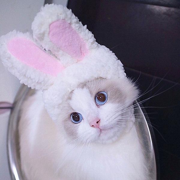 cute, Fashion, performance, rabbitear