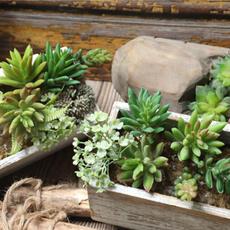 Bonsai, Mini, Plants, Flowers