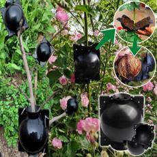 Box, Plants, plantrootingpreparation, growingbox