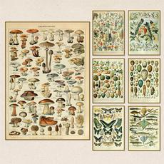 art print, butterfly, Plants, Wall Art