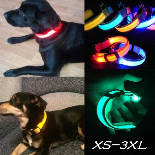 belt, Vest, Canes, Dog Collar