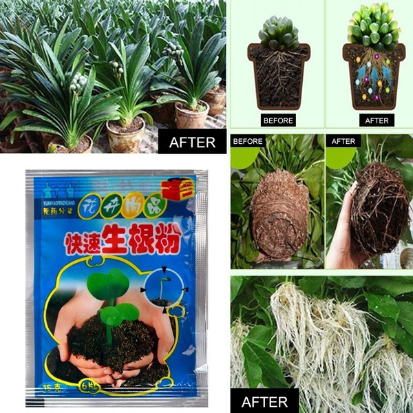Bonsai, Plants, Garden, gardenplant
