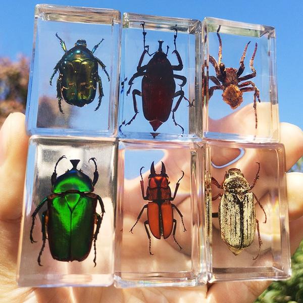 amber, creativegadget, inseto, specimen