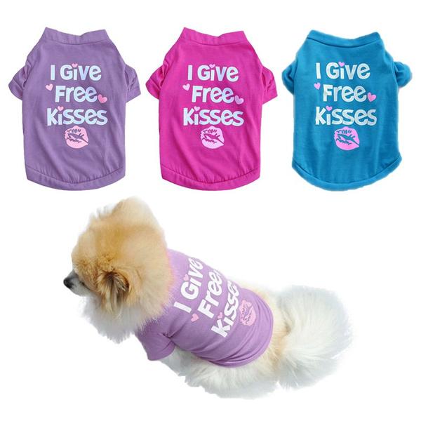 vestletter, puppy, Teddy, Pets